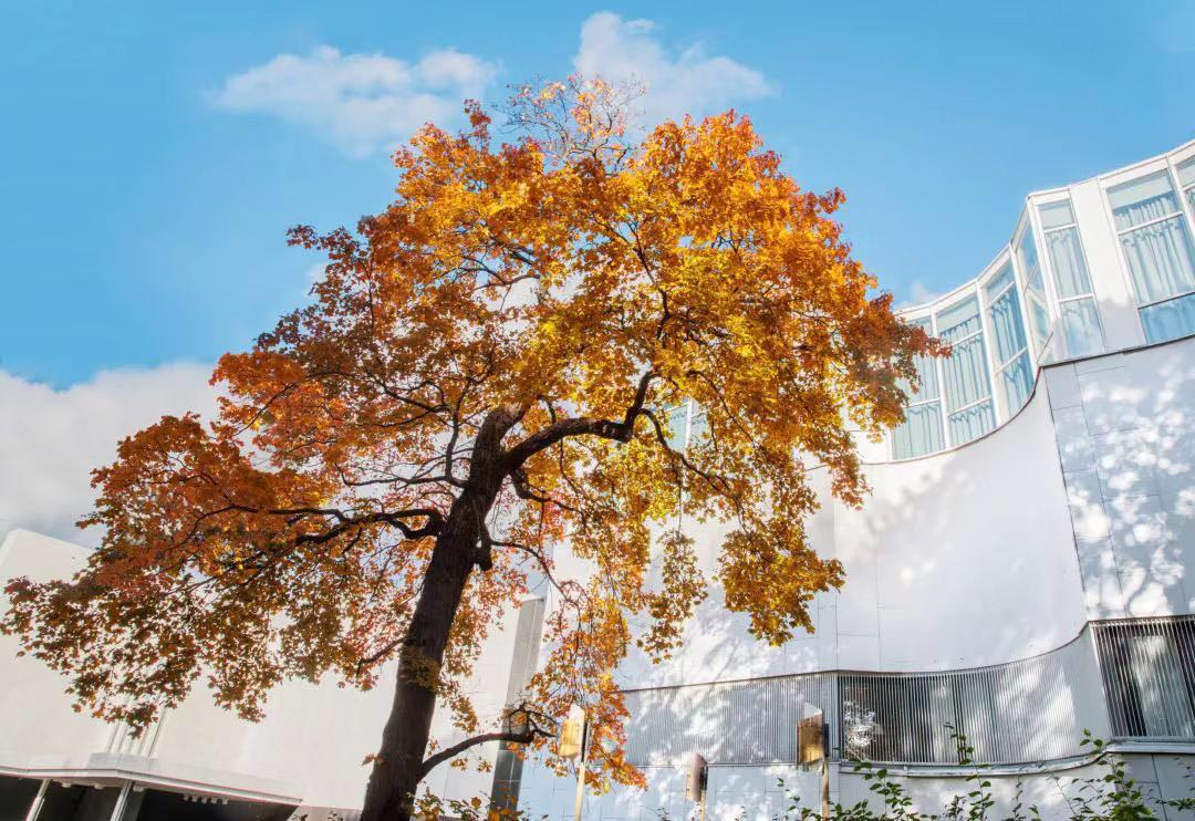 从芬兰大厦开始,感受秋天的赫尔辛基