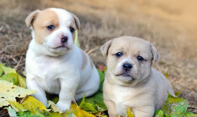 普贝斯:养狗后产生一些特殊癖好你有吗?