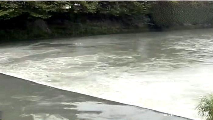 拉布拉多犬酿悲剧,将主人拽进河道溺亡,养大型犬的要注意