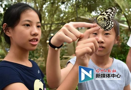 福州首家蝴蝶研学基地落地永泰 可与上千只蝴蝶亲密互动