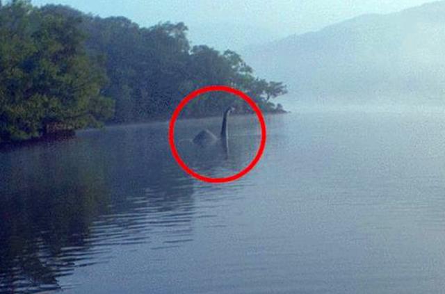 尼斯湖水怪之谜新破解,专家研究公布是一种常见动物,可以相信吗