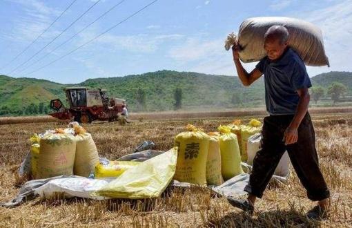 以前农民靠种地就能养家,为啥现在却不行了,还要出去打工挣钱?