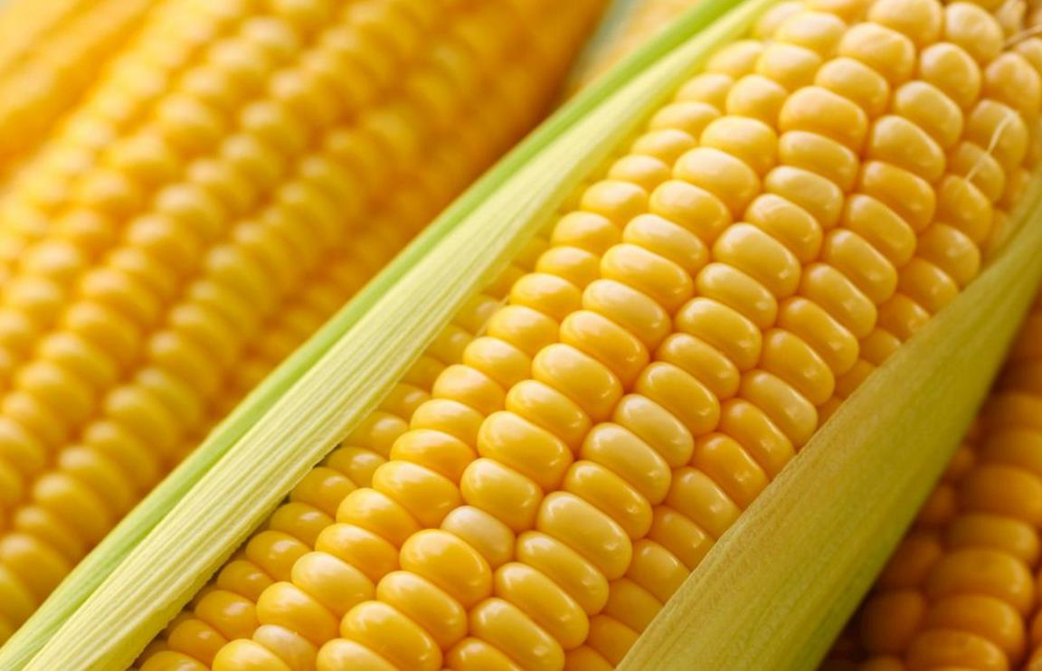 玉米生着冻还是煮熟冻?这是正确的做法,放一年还是新鲜的