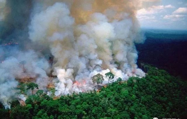 中国卫星出手,揭亚马逊大火真相,世界被骗了