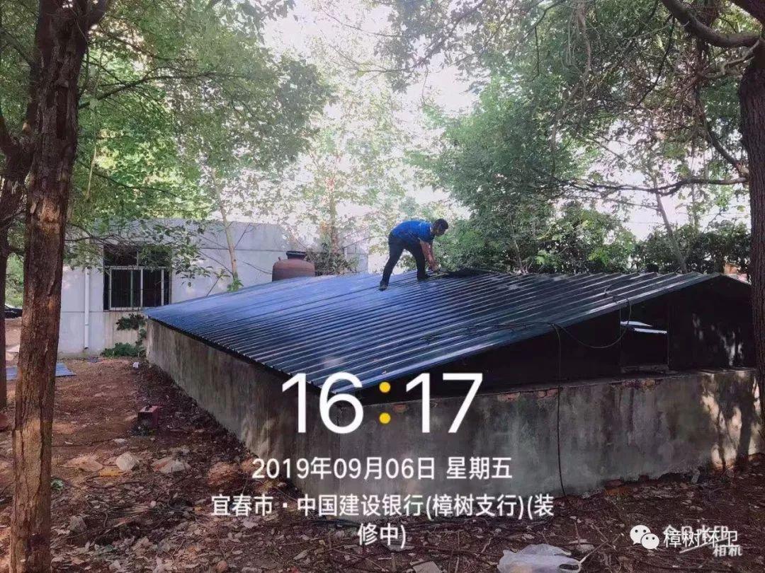 樟树 - 中文百科
