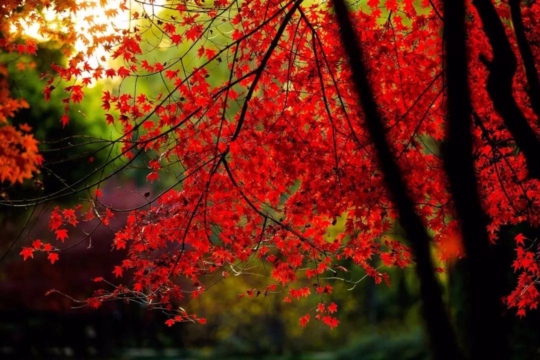 泛舟闲游,林间野趣,秋天在嵩县怎么玩儿?
