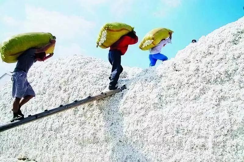 棉花产量或高于去年,价格会继续承压下探还是上涨?