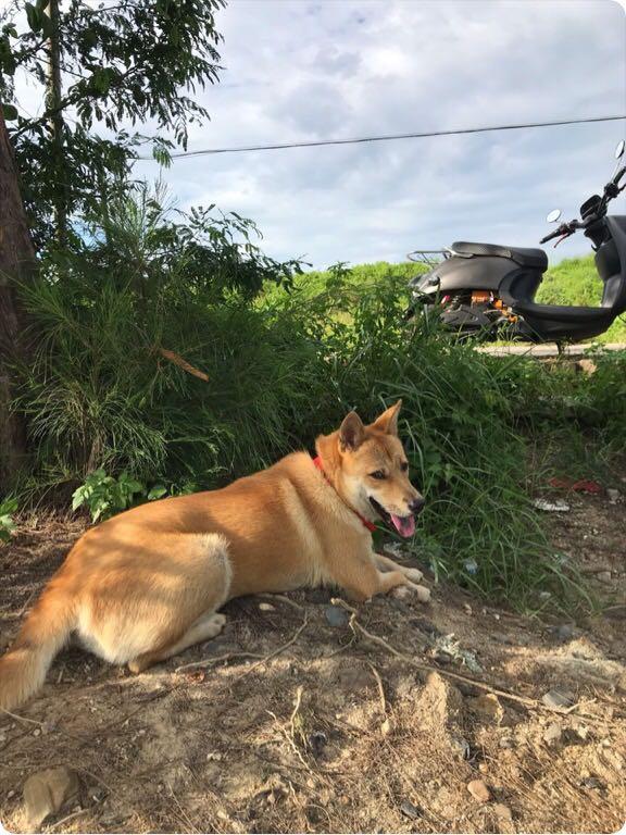 土狗在帮主人看着菜园子,有狗狗来找它玩,狗:不去!