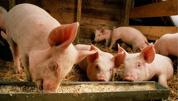 温氏育肥猪场设计图
