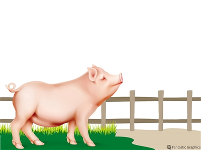 17条硬措施支持生猪生产发展