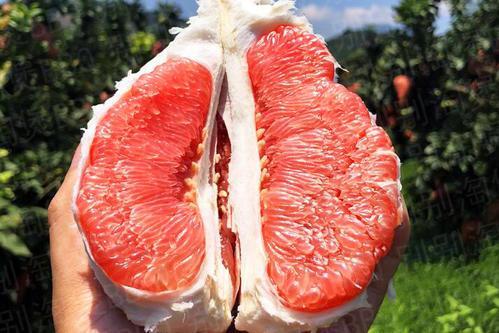 吃红心柚子能抗衰老、吃柚子皮养生?秋季吃柚子,别陷入几种误区