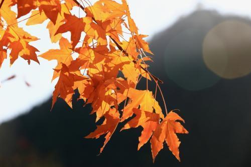 中秋进补,吃6种食品润肺防秋燥,有海鲜、有水果、还有几种蔬菜