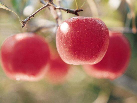 世界公认的抗衰老食物多吃西红柿令皮肤保持白皙