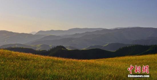 祁连山国家公园青海片区昆虫资源丰富