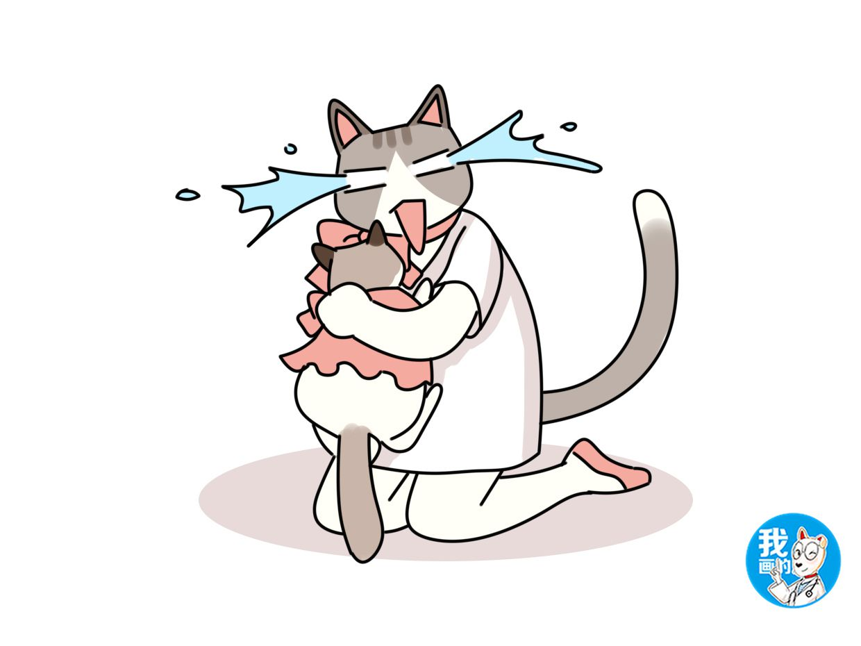 布偶猫不吃猫粮怎么办图片