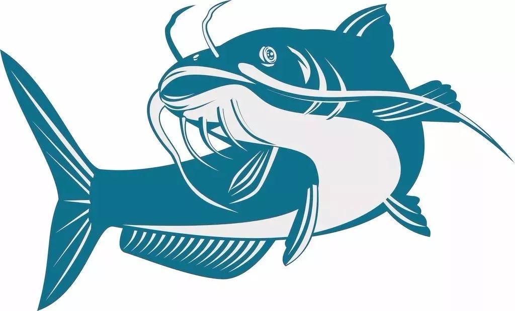 鲶鱼的原理_关于鲶鱼的基本知识 水族馆 鲶鱼 种类 新浪网