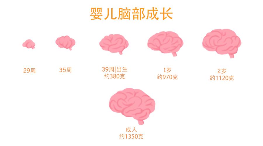 0~6岁大脑发育黄金期,这件事很简单,做到让娃更聪明!