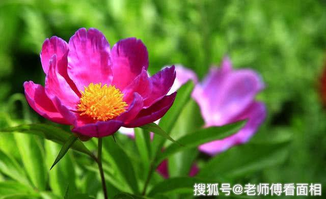 三生肖从9月开始好运降临,桃花朵朵遇真爱,喜结良缘,幸福美满