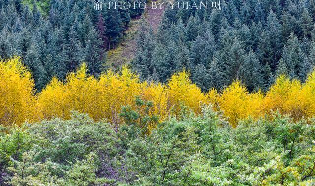 祁连山上有个仙境般的仙米国家森林公园,其中的聚阳沟美如童话