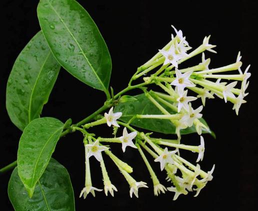 这几种花好看四季开花,却不能养在室内,花香会中毒