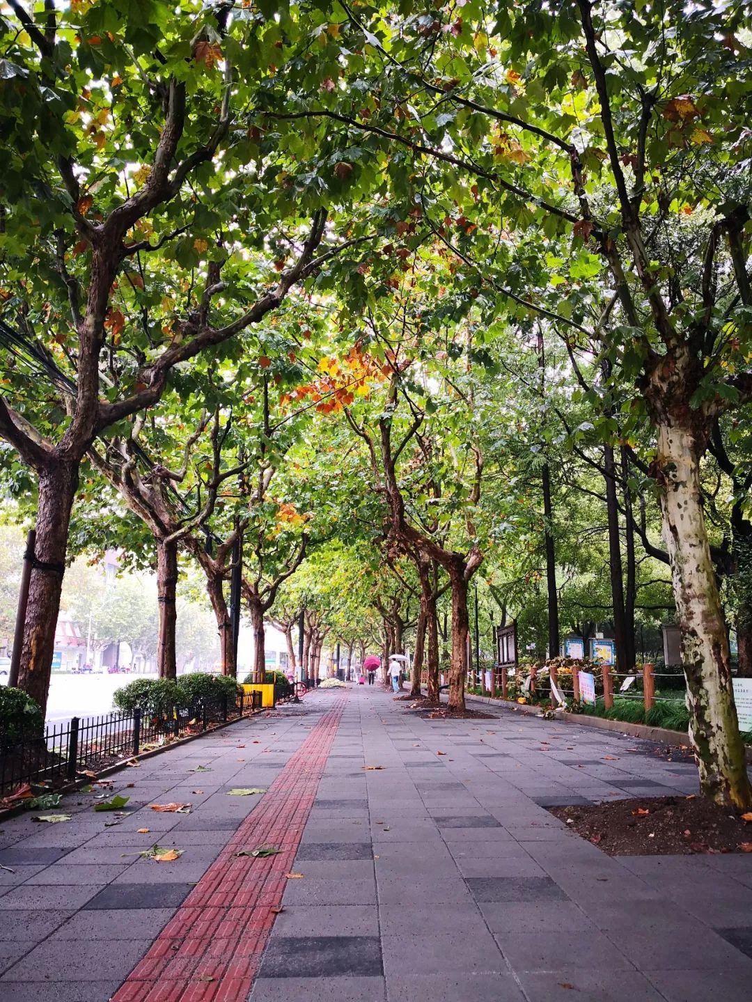 美美哒 长宁又将新添一条 市级林荫道