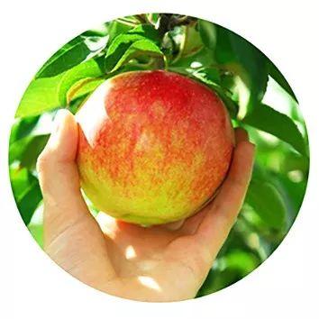 选购苹果只看大小和价格远远不够,这样挑才能买到又香又甜的