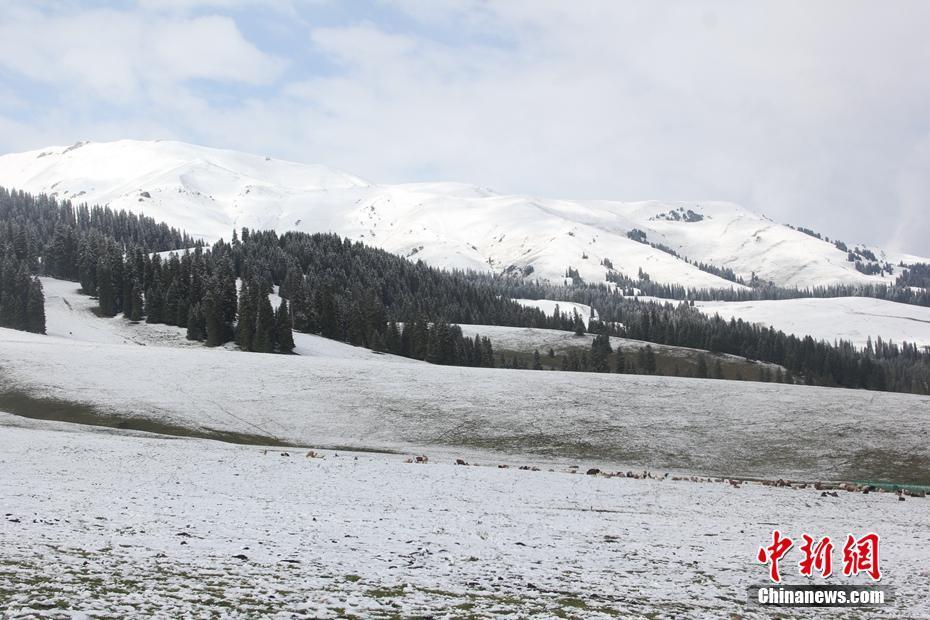 新疆那拉提迎來入秋第一場降雪
