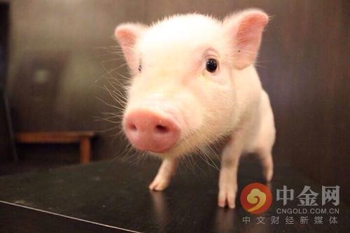 """养猪 环保 打环保旗号影响养猪大计!有地方打造""""无猪县"""""""
