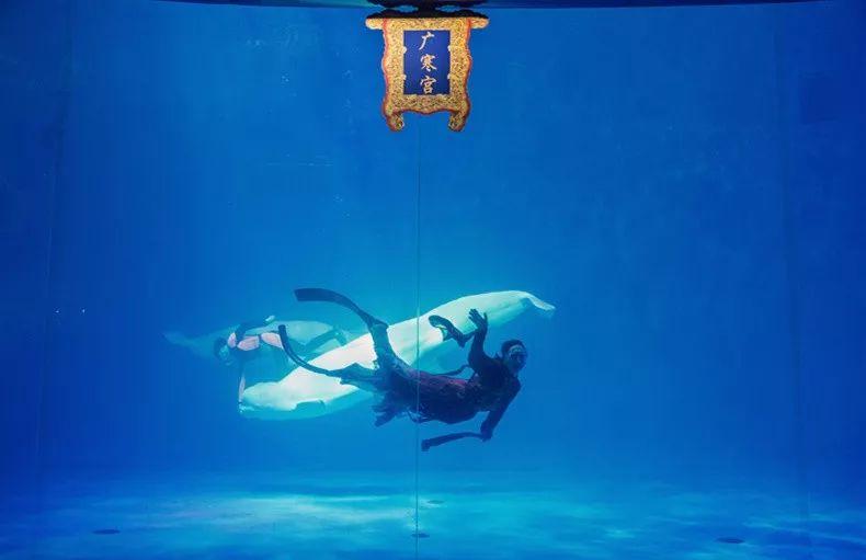 嫦娥仙女的玉兔换成了白鲸