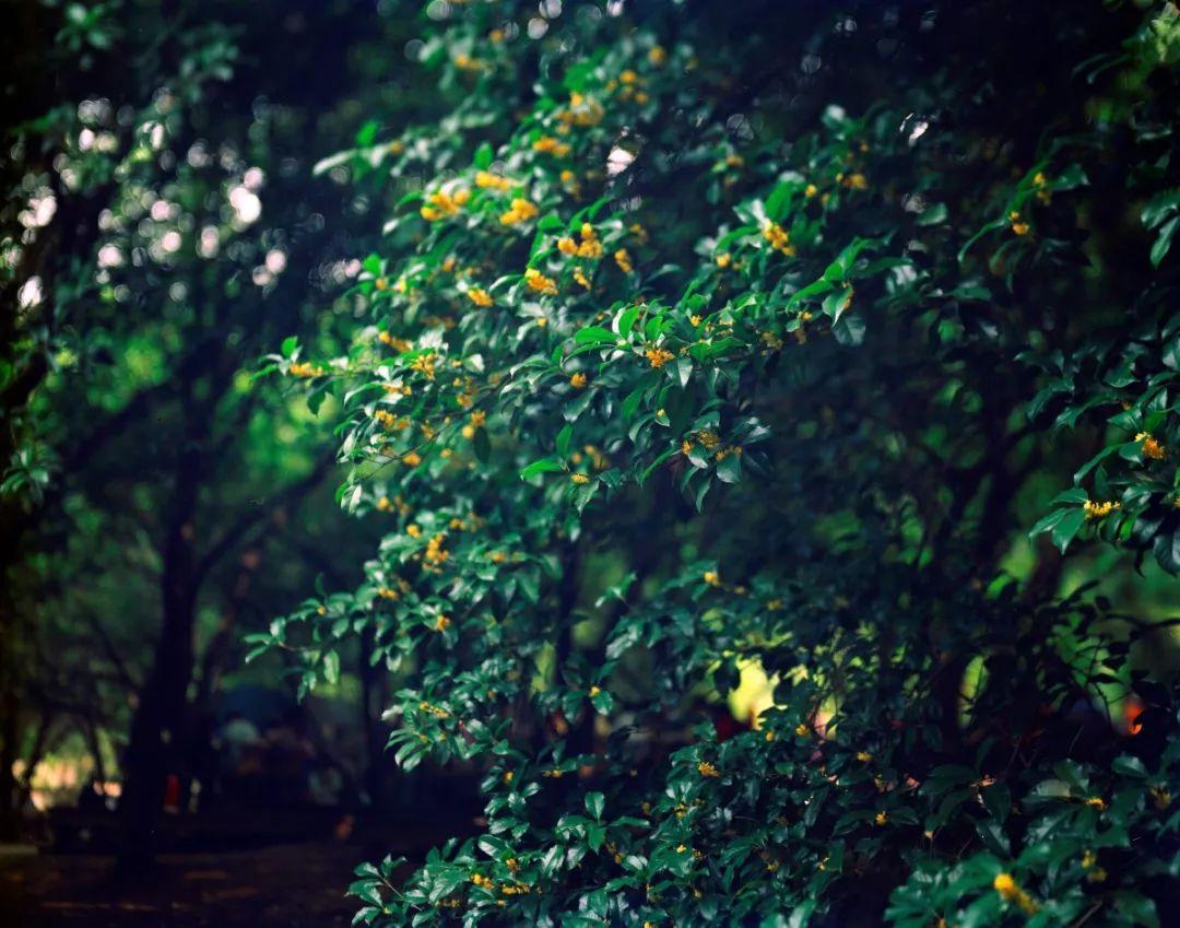 杭州纯天然植物��a_杭州植物园 供图