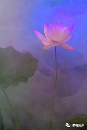 技法的不是高端单反,一部再普通不过的相机,拍出莲的中国画他用运用图片
