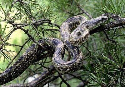 最恐怖的蛇图片_天下名蛇一网打尽