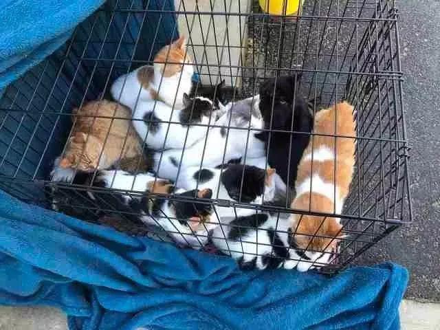 如果人生发生意外,无法继续抚养猫主
