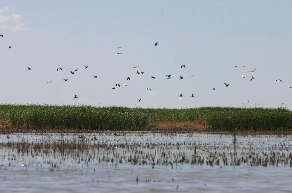 【游在塔城】千余泉眼,天然湿地,鸟类天堂……今天一起来游千泉湖
