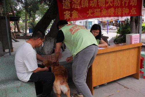 9月16日起 东莞道滘将免费为散养家禽、犬猫注射疫苗