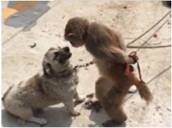爆笑GIF:我齐天大圣何时怕过你哮天犬