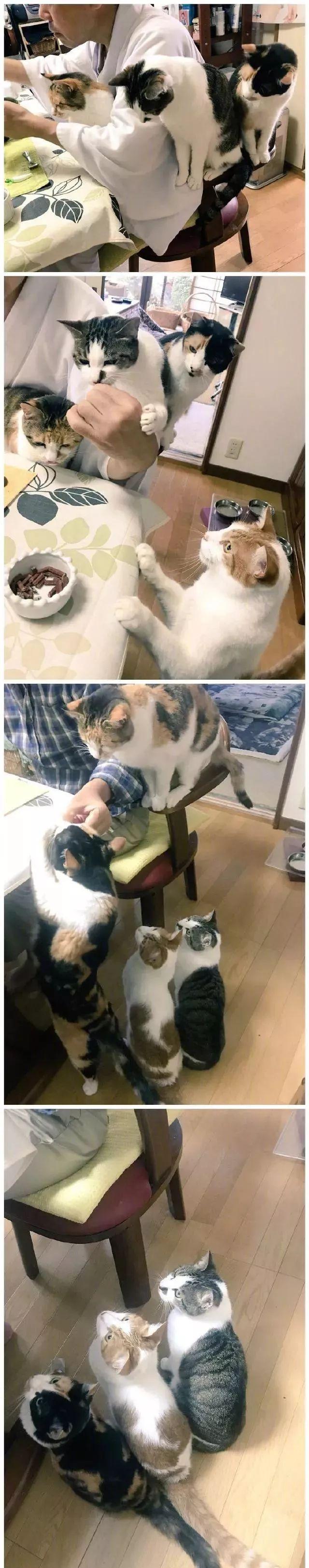 色人格色撸撸_日本一寺院收养四只猫以后,住持就每天沉迷撸猫!