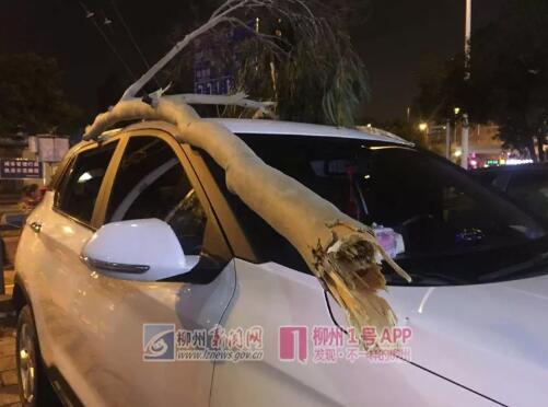 大风吹断树枝,柳北文化商业广场多辆汽车被砸坏