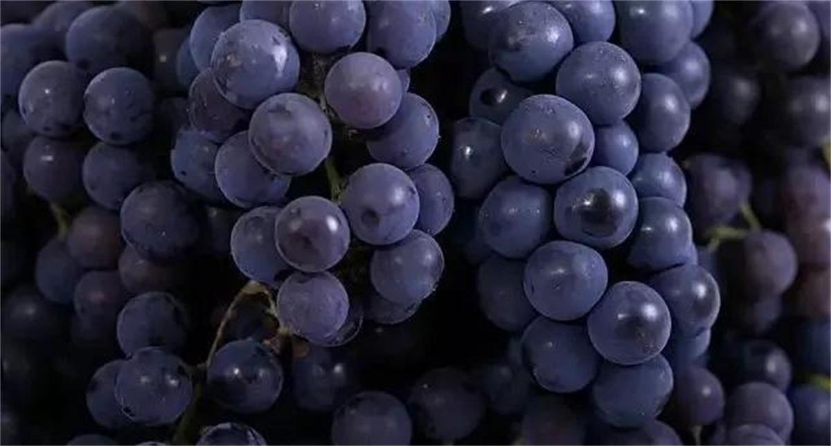 什么葡萄酿酒最好 [葡萄水果酒发酵方法-水果酿酒技术]