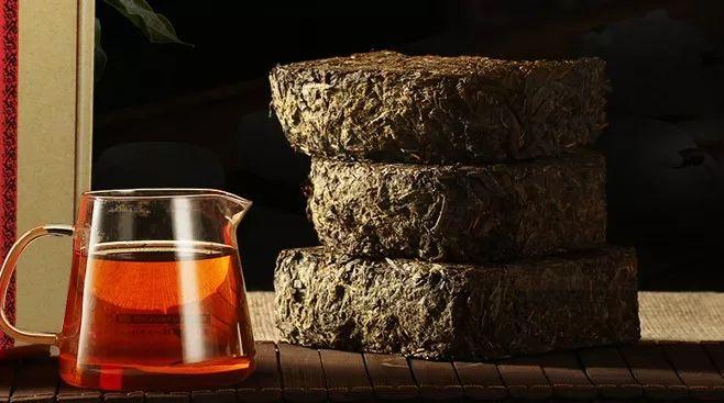 """安化黑茶原料为什么是""""粗枝老叶""""?"""