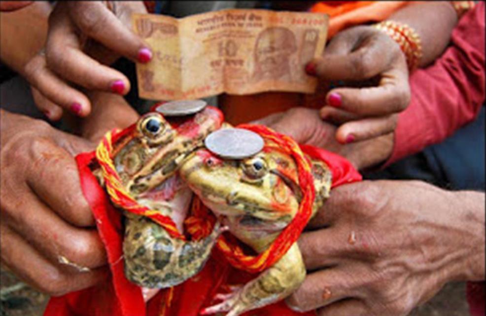原创 印度村民又一荒唐事:青蛙联姻祈求降雨,如今慌忙为其离婚