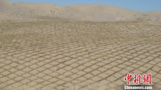 青海完成防沙治沙任务30.07万公顷