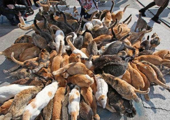 「自由猫」大量出没!日本猫岛的超治愈日常