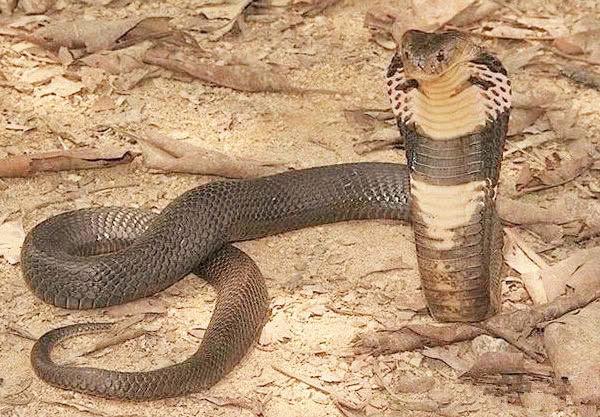 我国有一种毒蛇比老虎还凶