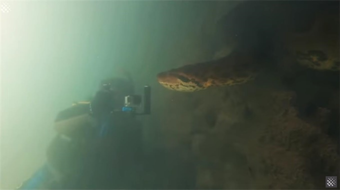 """世界上最大的蛇你见过?巴西潜水员水下偶遇7米巨蟒""""亲密接触""""被完整拍下"""