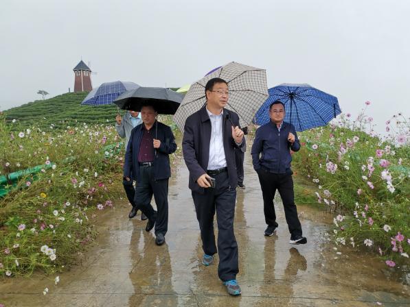 商洛市委常委、市统战部部长杜志强同志到金桥茶业检查指导工作