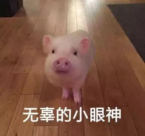 國家發話了!養豬最高補助500萬!隨州人要組團養豬嗎?
