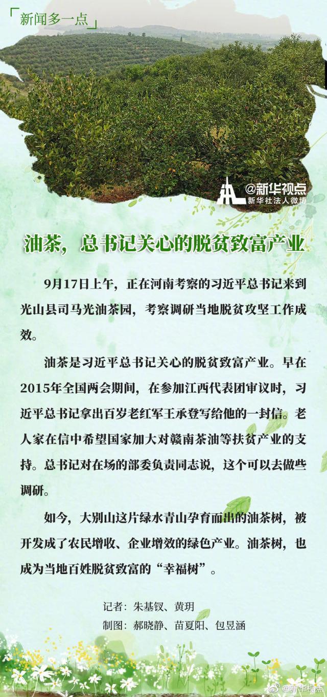 油茶,总书记关心的脱贫致富产业_光山县