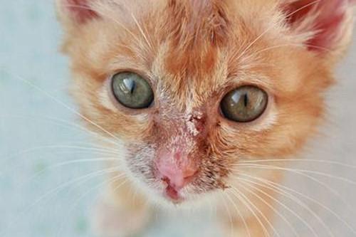 原创            【奇妙の猫咪物语】小猫的