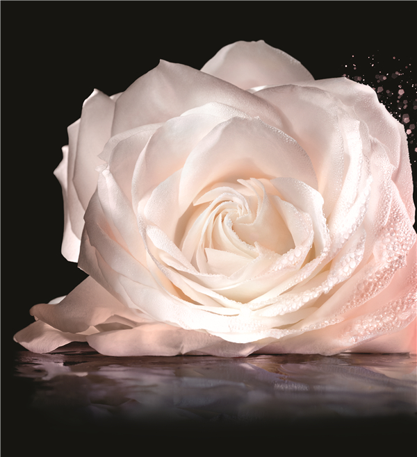 让DIOR迪奥为你,一瓶缔造完美玫瑰肌!